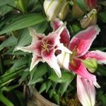 en el Conservatory of Flowers, Golden Gate Park (SF)